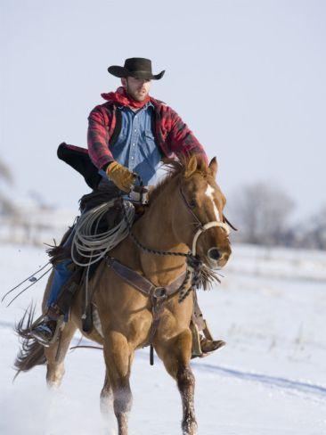 Cowboy Cantering Through Snow on Chestnut Red Dun Quarter