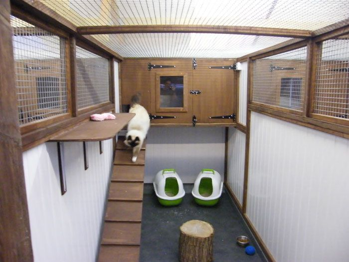 One of the cat rooms at Little Hay cattery