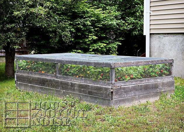 Covered Raised Strawberry Bed Also Great Tips On Growing