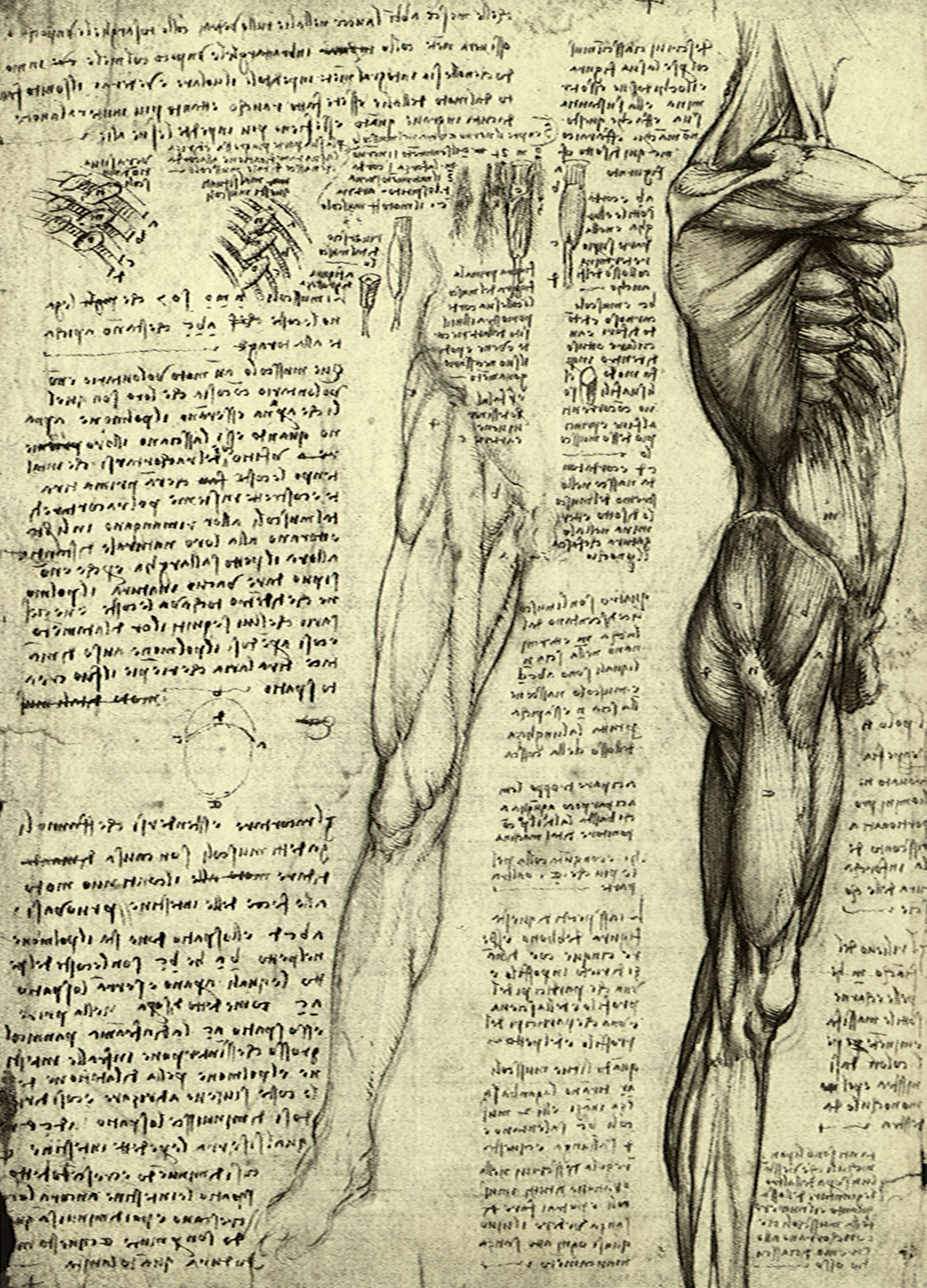 Vintage Scientific Anatomy Sketches | Anatomy | Pinterest | Anatomy ...