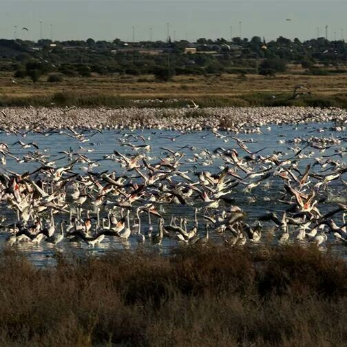 At Kamfers Dam in Kimberly you may just run into around 20 000 flamingos. Have you been? #MeetSouthAfrica