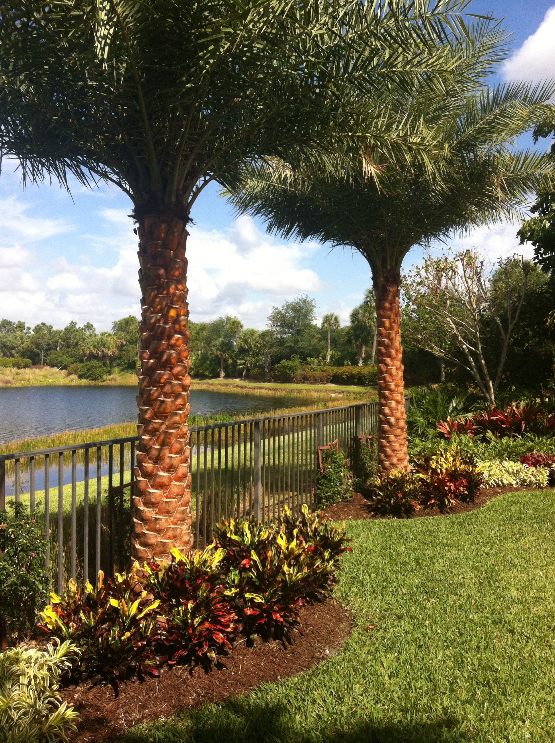 Sylvester date palm landscape install complete | Palm ... on Palm Tree Backyard Ideas id=31678