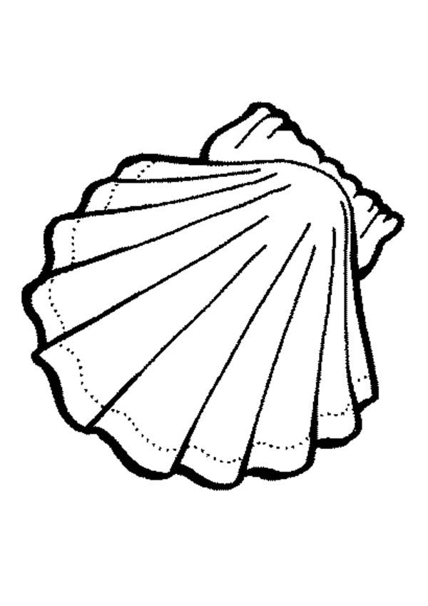 Seashell Coloring Page : seashell, coloring, Seashell, Coloring, Pages, Seashell,, Exquisite, Calico, Scallop, Animals, Drawings,, Animal, Pages,