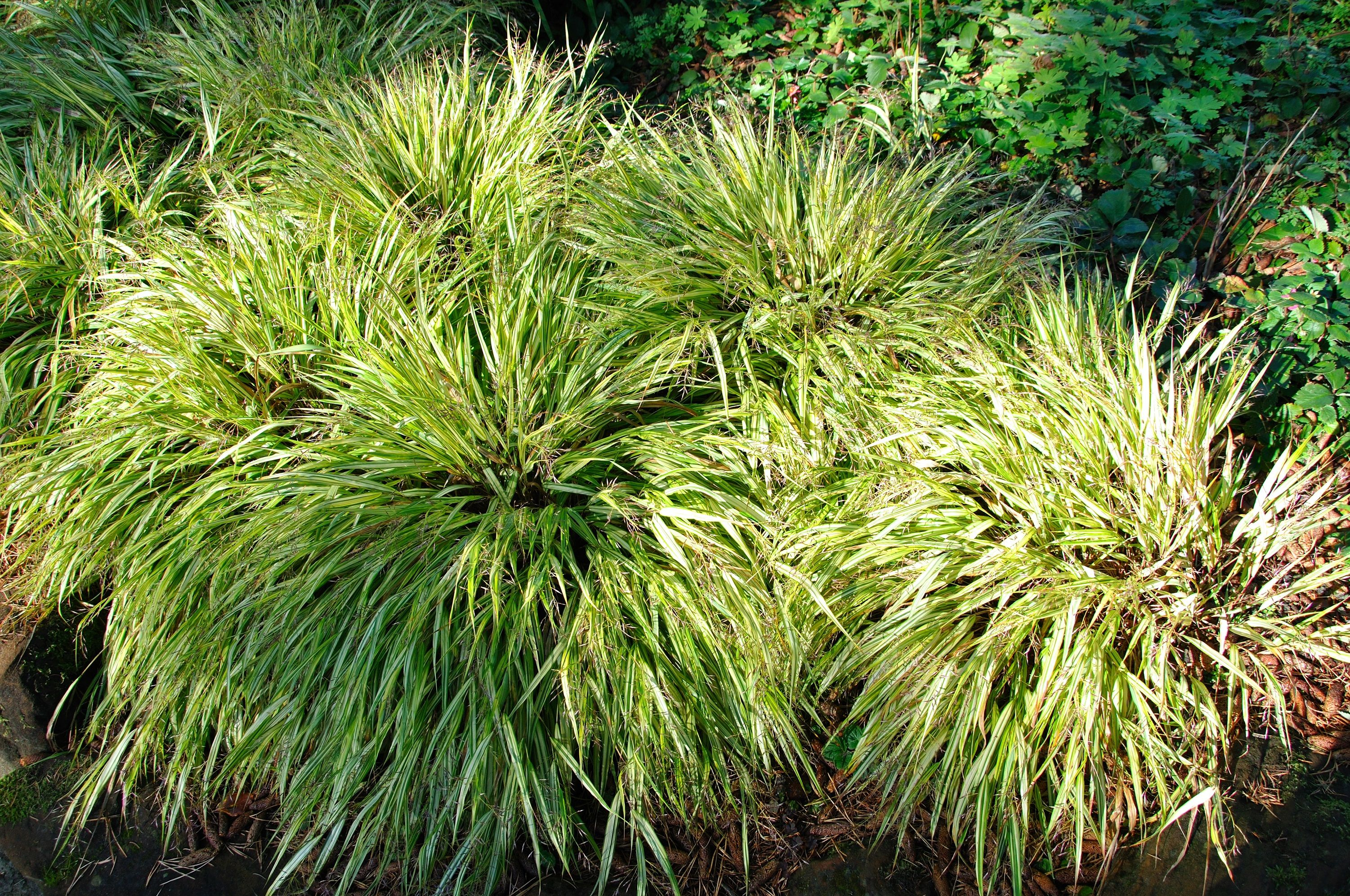 Featuring thousands of species, #grass flows with the #wind, adding #movement and #texture to a #garden. We have many fine examples beautifully arranged in our gardens. #ComptonAcres