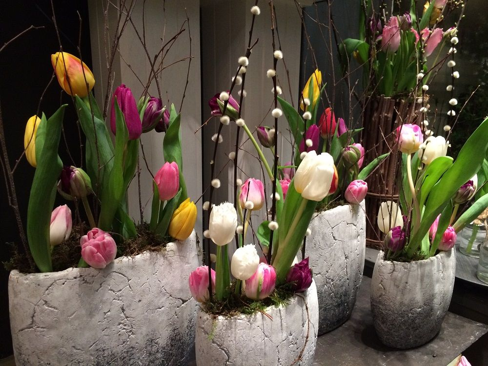 Spring has sprung - love mixed colour tulips