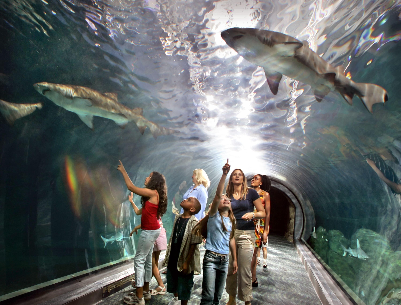Adventure Aquarium is one of the coolest aquariums in NJ