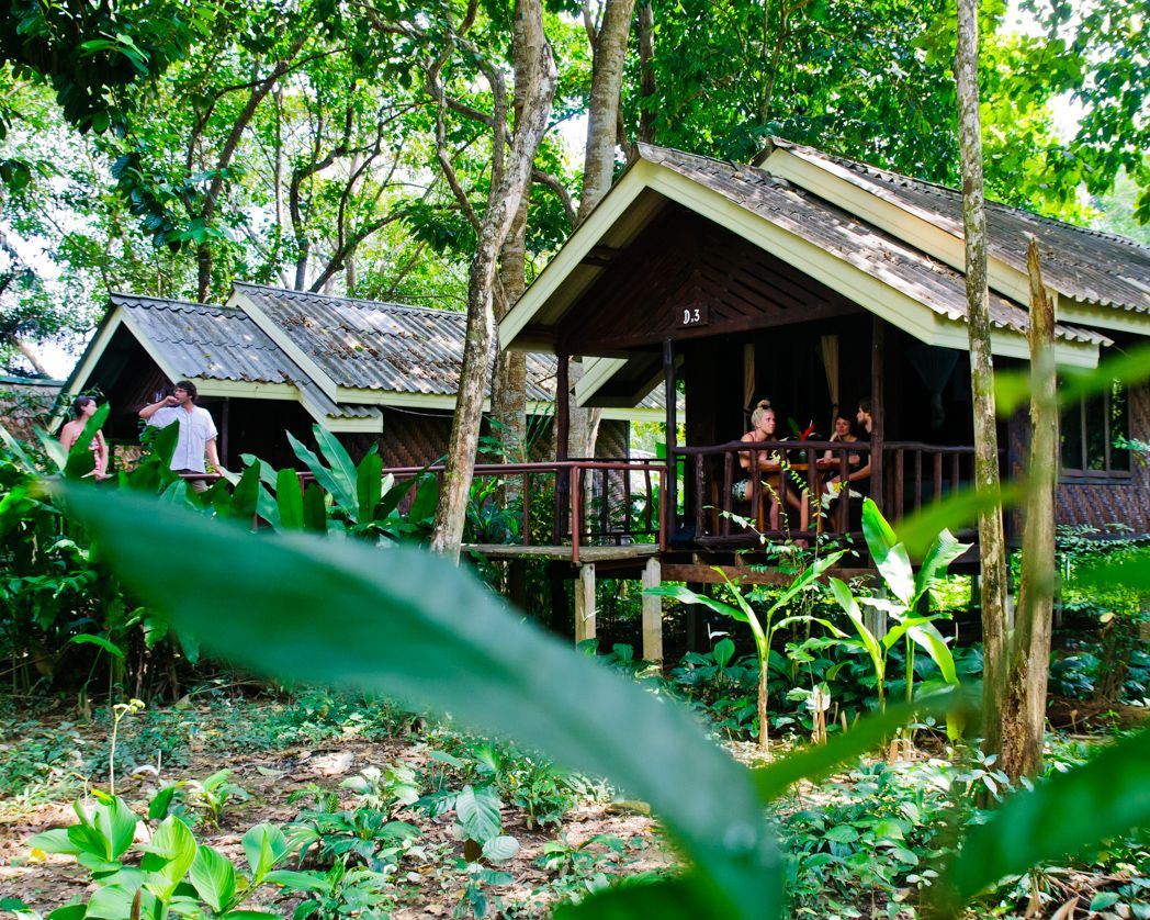 Khao Sok National Park Accommodation. Stay in the rainforest near the lake. Live in harmony with n… | Khao sok national park, Riverside cottage, National park tours