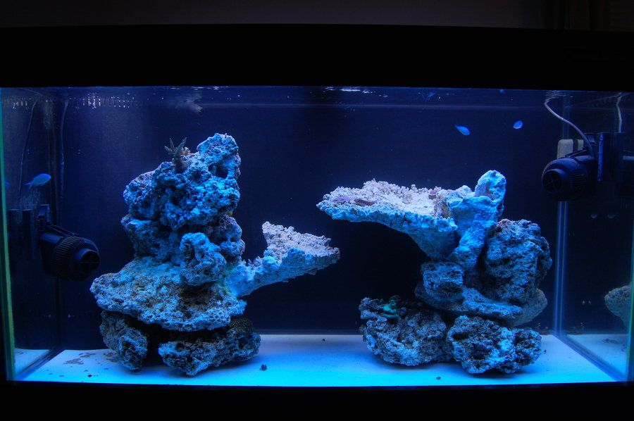 Show off your Island Style AquaScape - Reef Central Online ...