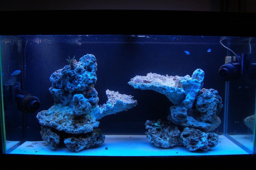Show Off Your Island Style Aquascape Reef Tank Aquascaping Saltwater Fish Tanks Reef Aquarium