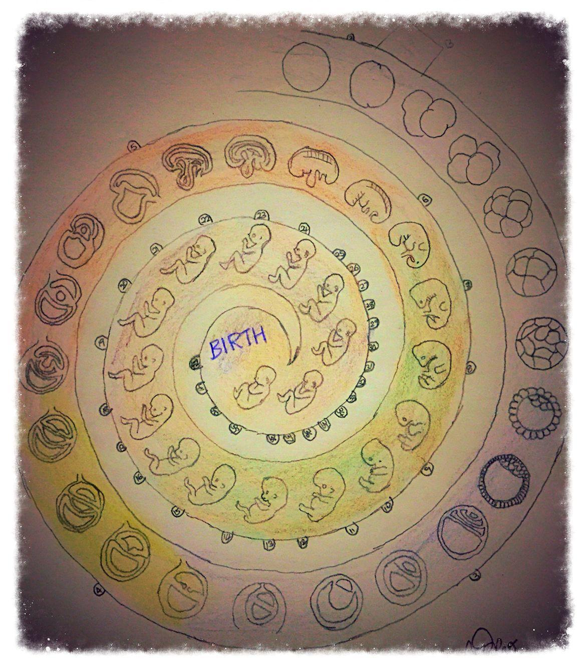 Human life cycle of birth