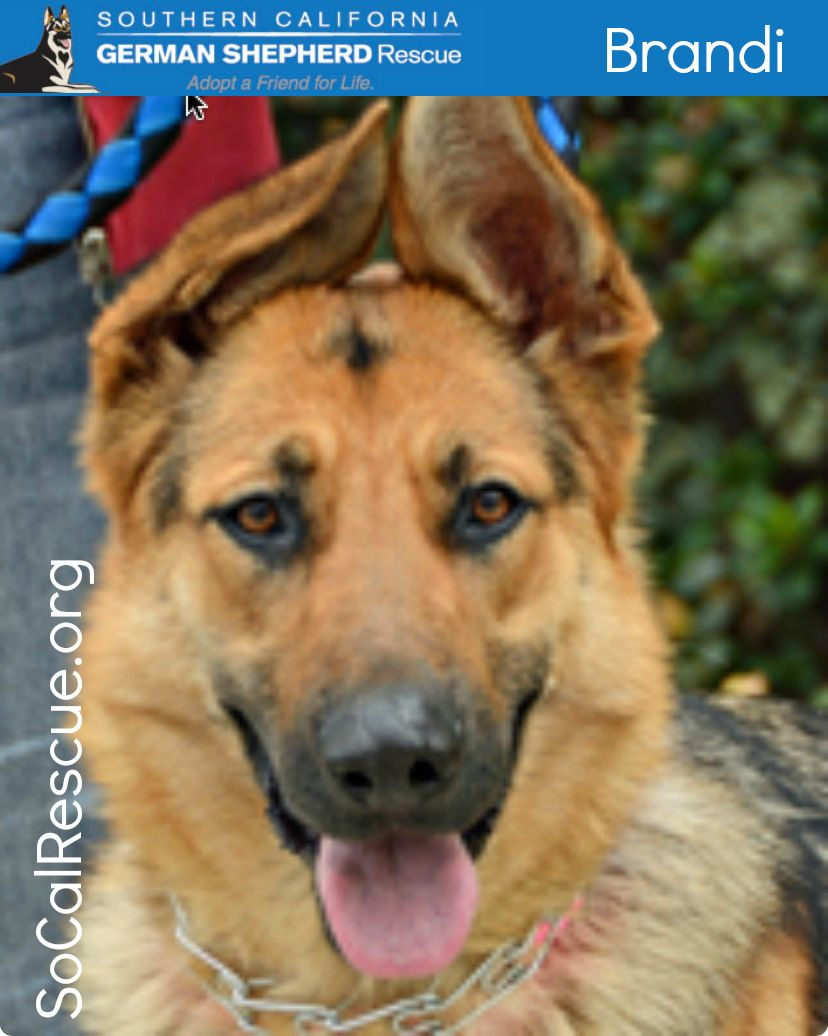 Brandi Sweet Shy Young Lady Looking For A Loving Home Brandi Is
