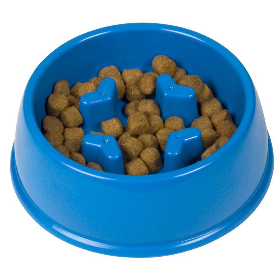 Slow Down Dog Bowl Encourages Slower Eating And Helps Improve