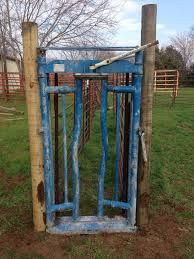 Image Result For Diy Calf Chute Raising Cattle Cattle