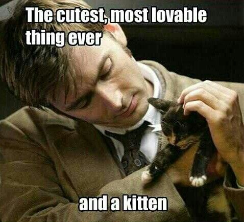 David Tennant and a kitten. What more could you want?