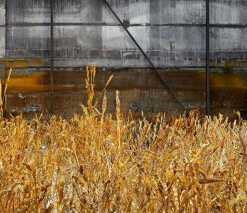 """Résultat de recherche d'images pour """"harvest"""""""
