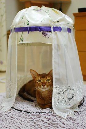 Lunasol Diary 猫ベッドも冬仕様 猫 猫の家具 猫 インテリア