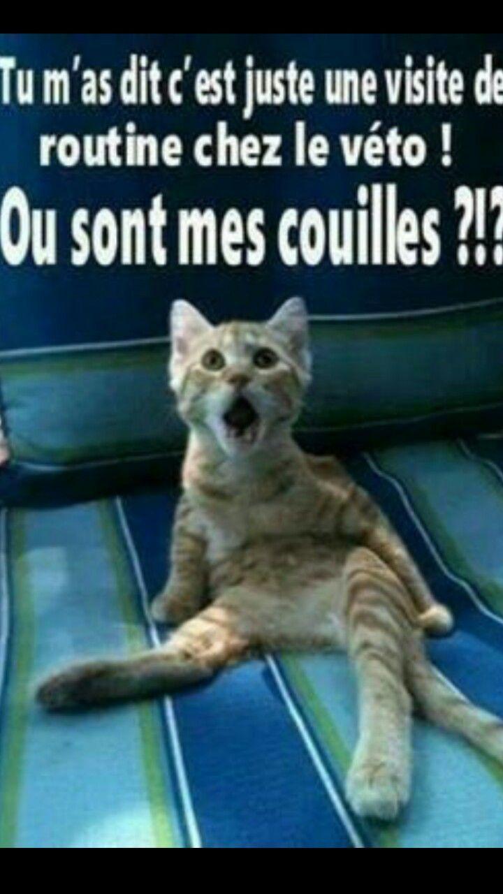 Chat drole - Hazard | Photo drole animaux, Blague animaux et Blague chat