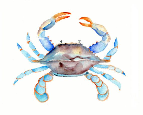 Blue Crab Watercolor Crab Art Sea Life Art Beach House Decor