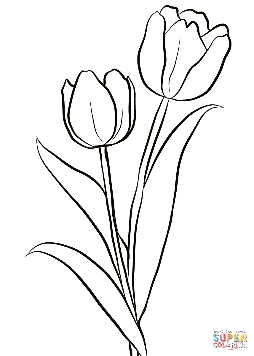 Two Tulips Coloring Page From Tulip Category Select From 28148 Printable Crafts Of Cartoon Printable Flower Coloring Pages Tulip Drawing Flower Coloring Pages