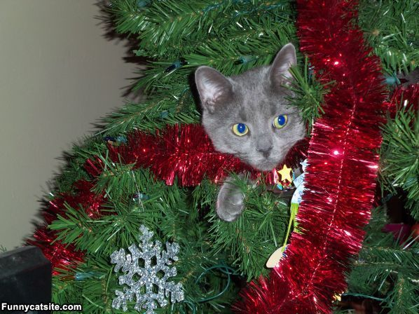 Oh Christmas Tree Oh Christmas Tree Your Ornaments Are History Christmas Cats Christmas Kitten Christmas Time