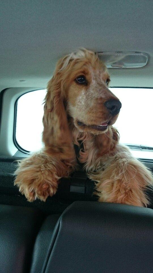 Blikkie in de auto