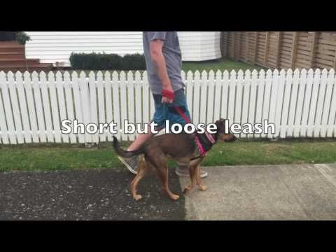 How To Stop Dog From Pulling On Leash Dog Training Training