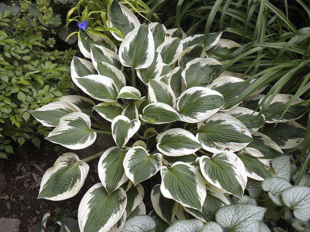 Patriot | Plant leaves, Plants, Garden on Patriot Outdoor Living id=61020