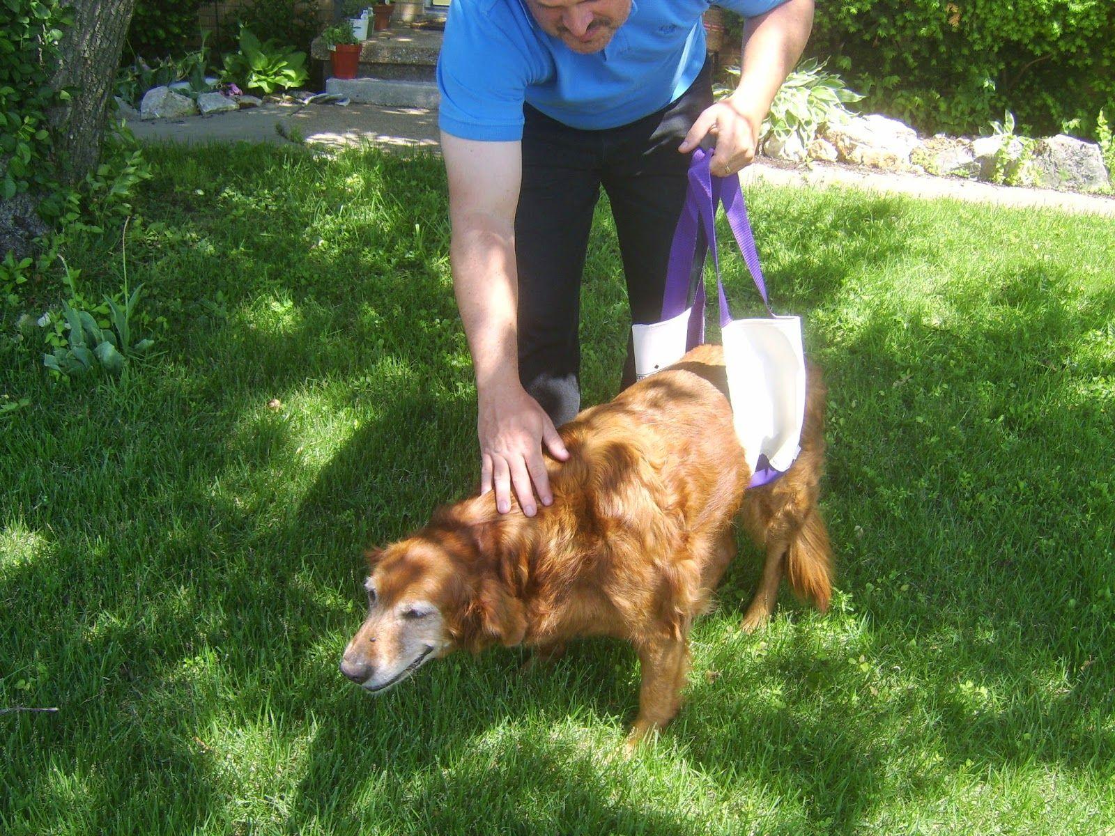 How To Make Your Own Dog Lift Sling Diy Diy Dog Stuff Dogs Dog