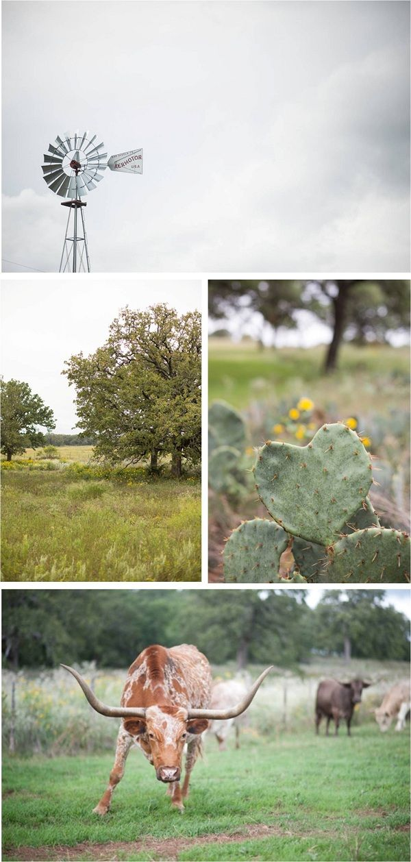 Scenery from a rustic fall wedding on a Texas ranch (how cute is the heart-shaped cactus?!)