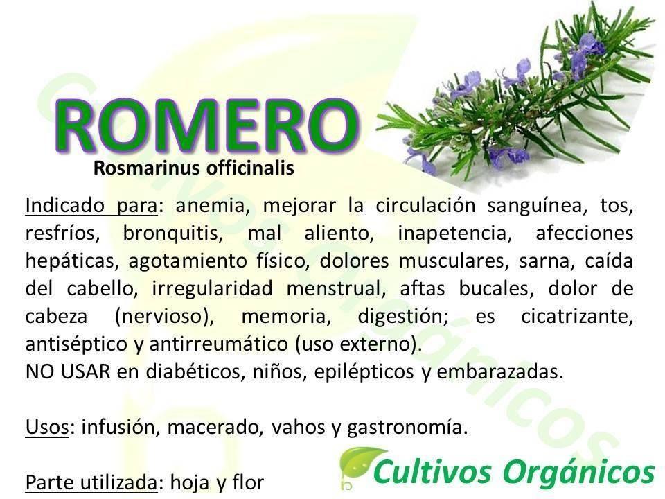Beneficios Del Romero Hierbas Curativas Fitoterapia Remedios Naturales
