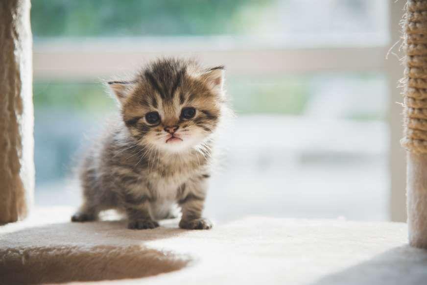 You Are Perfect Huening Kai Ff Kittens Cutest Kitten