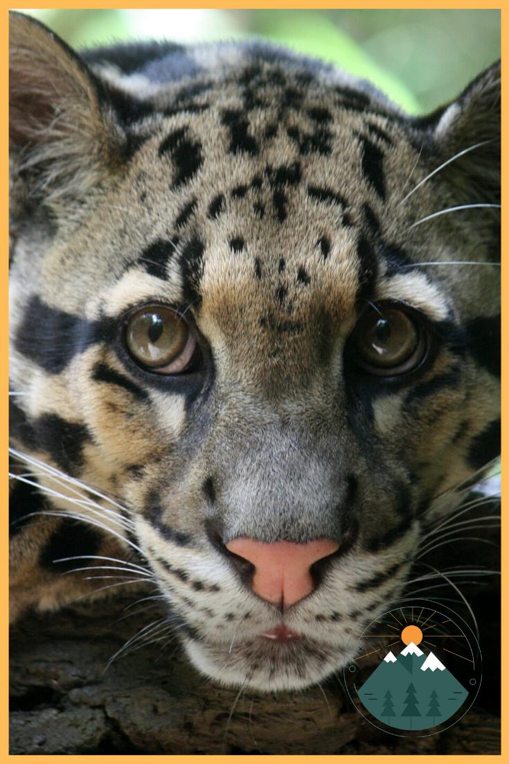 Cat Breeds Animal Planet