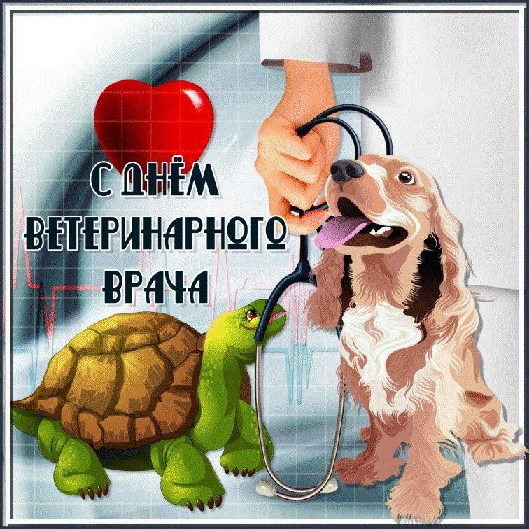 Картинки смешные, открытки на день ветеринарного врача