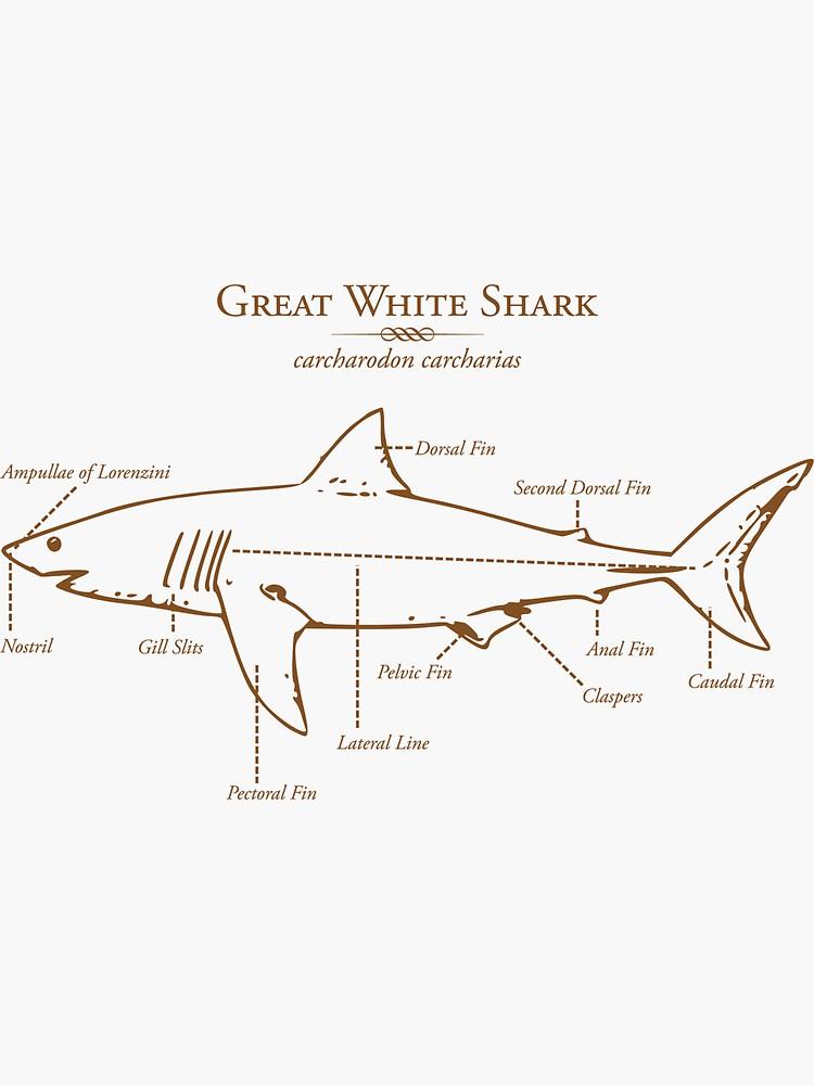 Great White Shark Illustration Sticker By Marcodeobaldia In 2020 Great White Shark Shark Illustration White Sharks