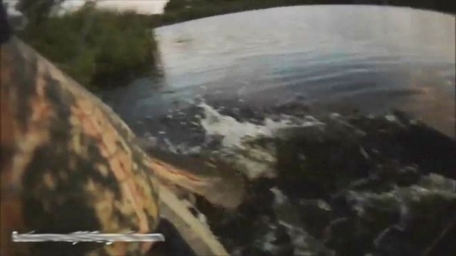 Helmet cam catches alligator leaping out of water, attacking kayaker