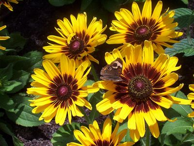 Yellow Flower Photos