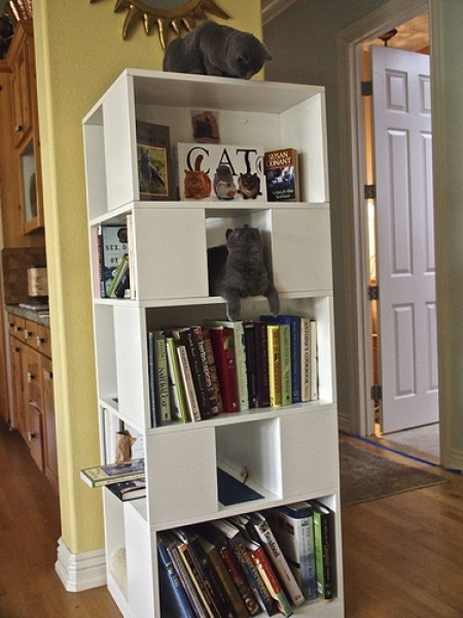 The CatCase: a Bookcase and a Ideal Playground for Your Cat - Just no cats