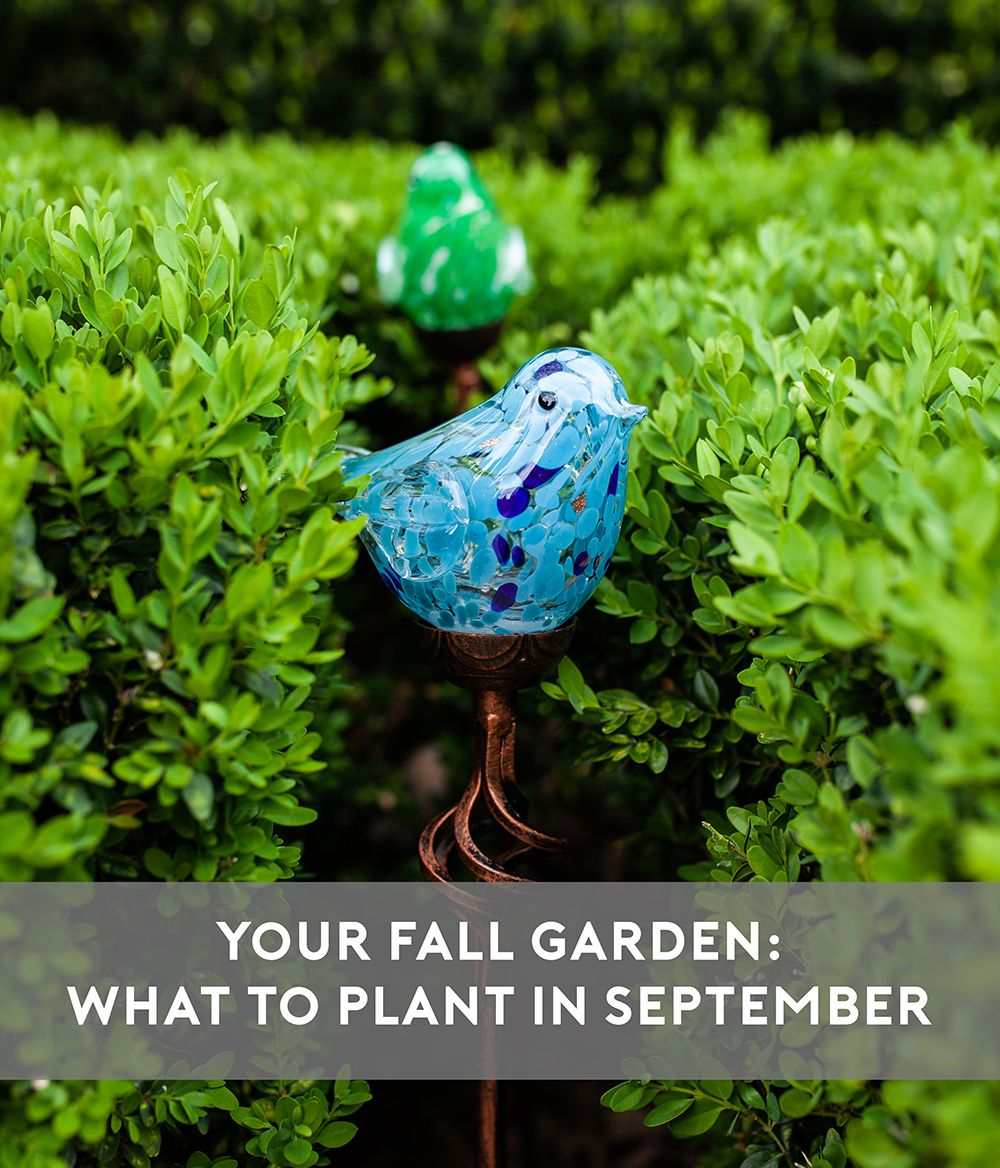 What To Plant In Your Fall Vegetable Garden In September