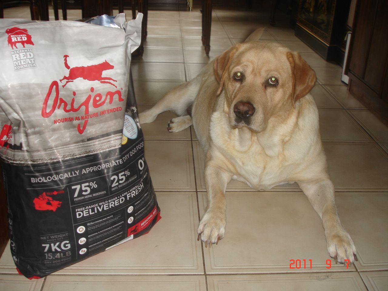 Orijen High Protien Puppy Food?