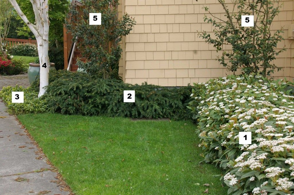 Low Maintenance Groundcover Grouping For Shade Inseattle Landscaping Trees Low Maintenance Landscaping Front Yard Landscaping