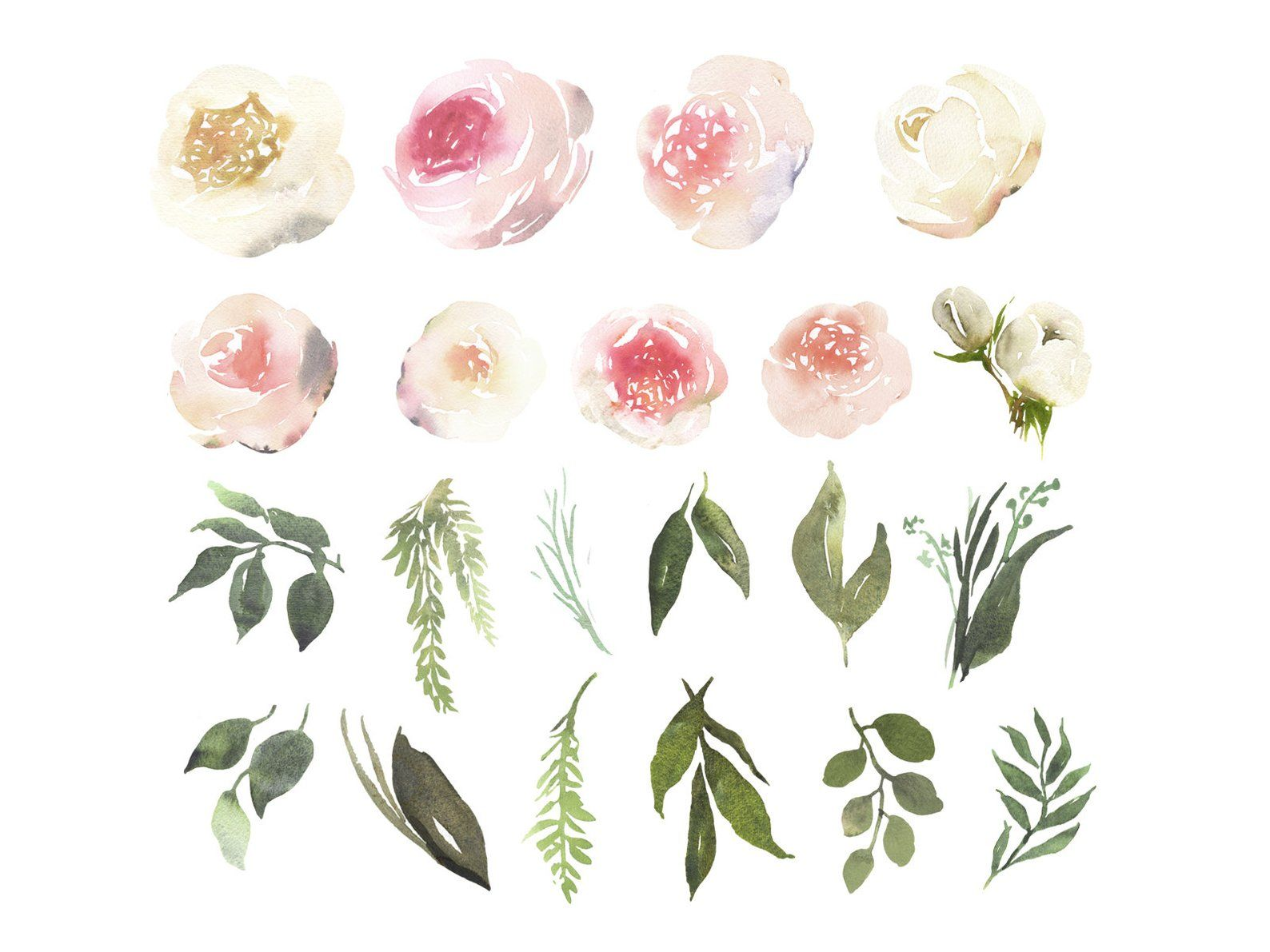 Adelaide Watercolor Clipart With White And Blush Roses And
