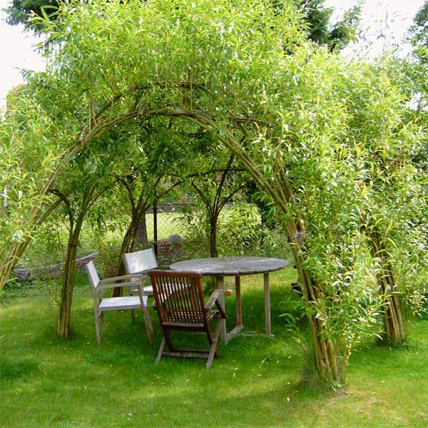 Kreativbau - Wendland - Weide Osier, saule, salix, wicker - garten pflanzen sichtschutz