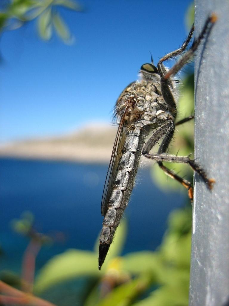 Alien insect shoot in Kornati national park - Croatia.