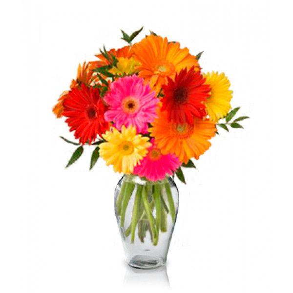 Gerbera Bouquet 12 Mix Colour Gerbera Flowers Fresh Flower Bouquets Flower Bouquet Delivery Flowers Australia