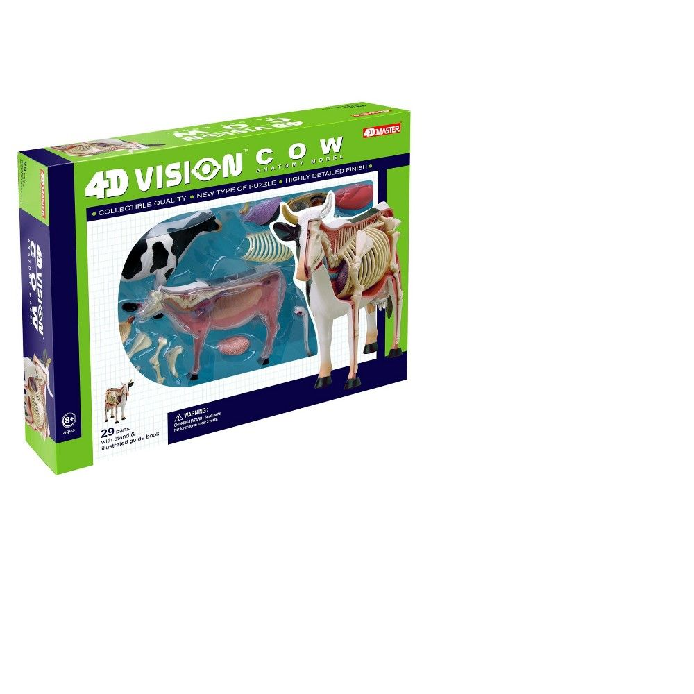 4d Cow Anatomy Model Anatomy And Biology Kits Anatomy Models And