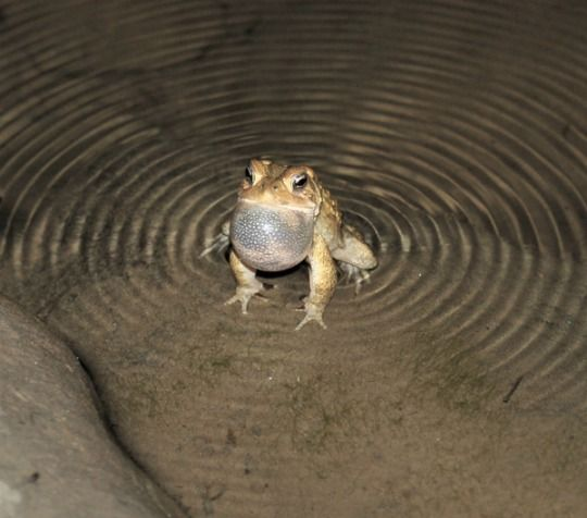 99 Funeral Frog Ideas In 2021 Frog Cute Frogs Frog Pictures