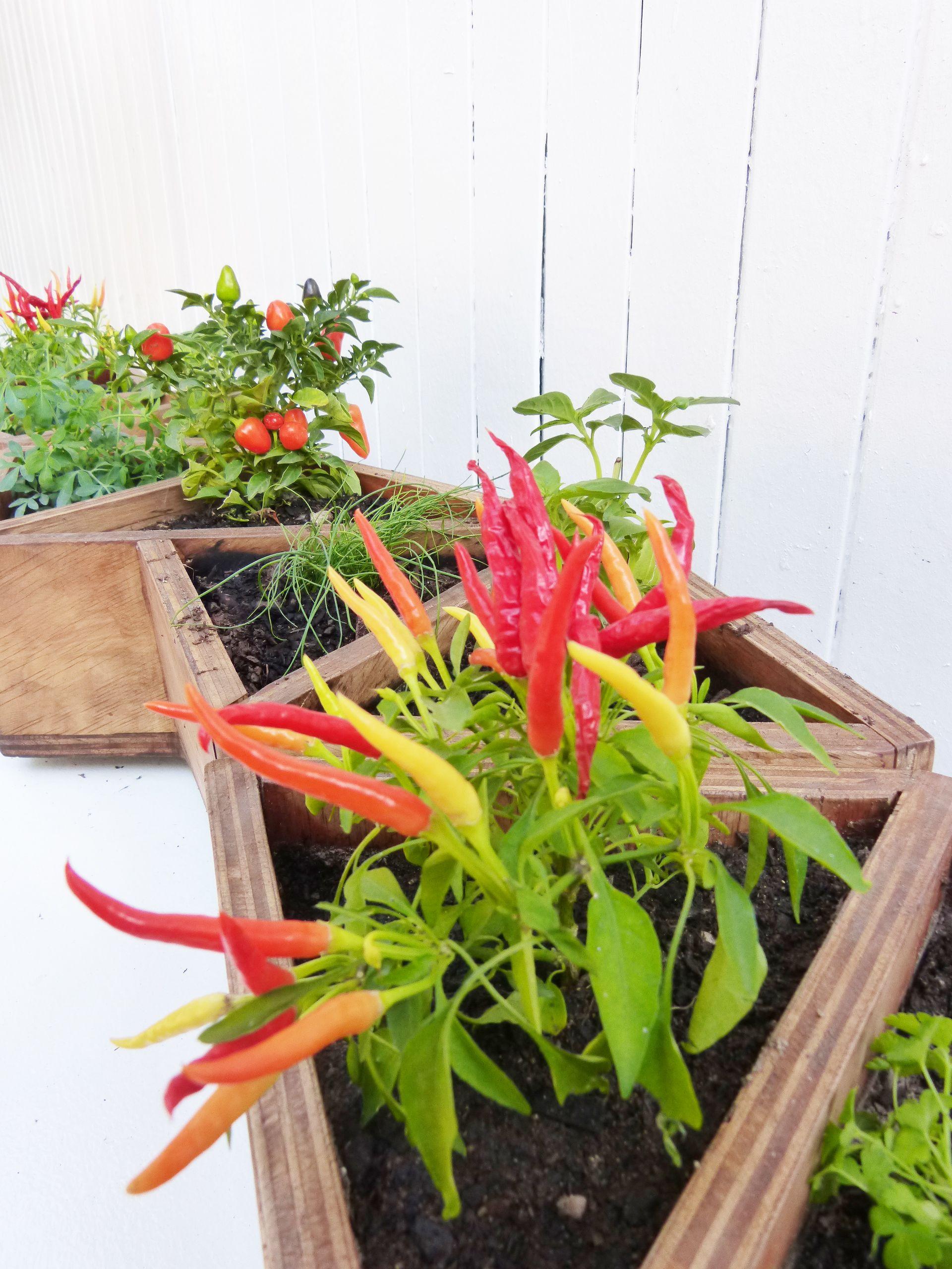 Huerto Robinson Muebles De Madera Y Proyectos Especiales  # Muebles Cultivados