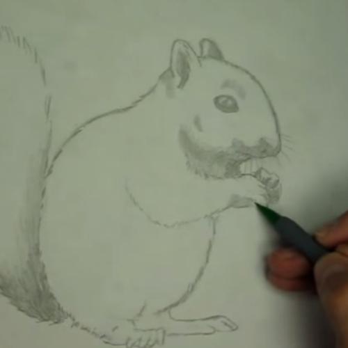 Wonderbaarlijk Hoe teken je een Eekhoorn? FILMPJE! | Dieren tekenen, Tekenen PP-92