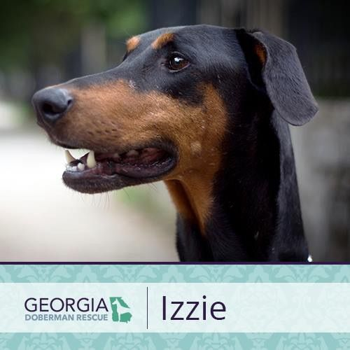 For More Information On Izzie Please Check Out Her Bio At Https