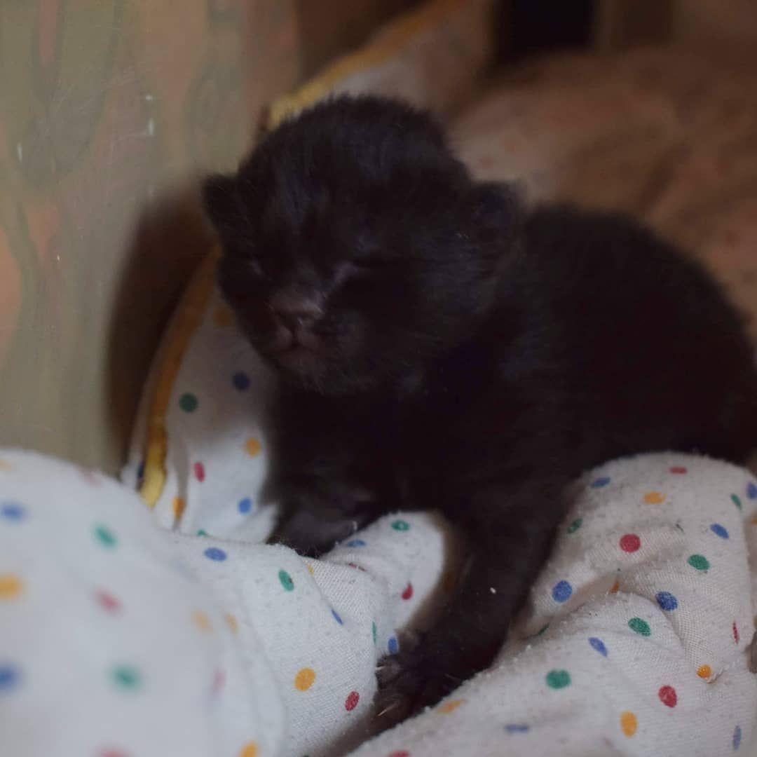 Little Black One Week Old Little Black Girl A Week Old